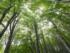 paduri-virgine-greenpeace